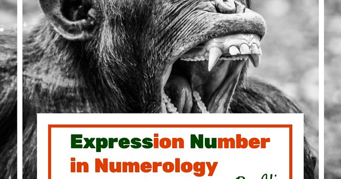 Expression Number in Numerology Meanings (1-9)